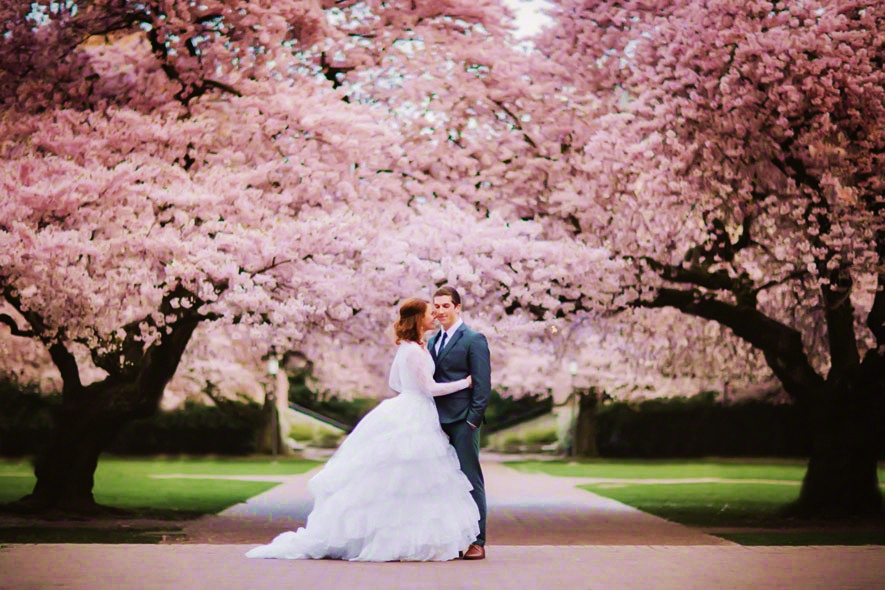 The-Cherry-Blossom-Wedding-Theme