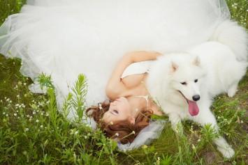 結婚式 演出 犬