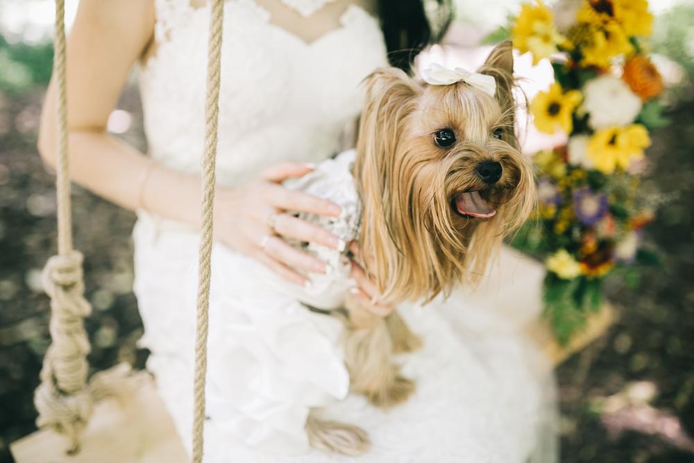 ペットだって家族の一員!ペット同伴の結婚式の注意点とおすすめの演出アイデア