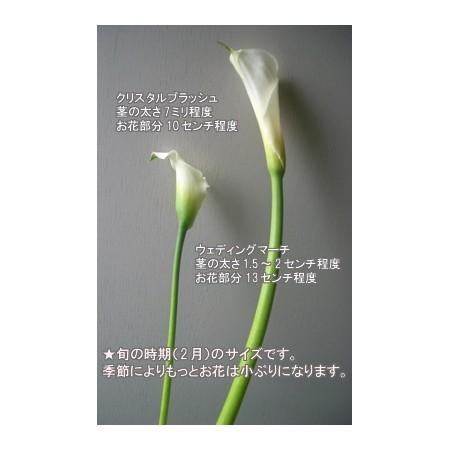 kk-0156__sub_1_1